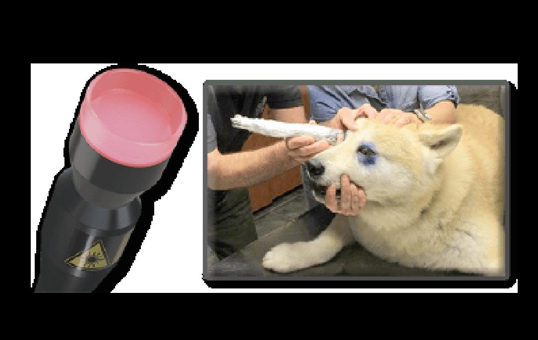 Safe Laser 150 eläinten silmienhoito